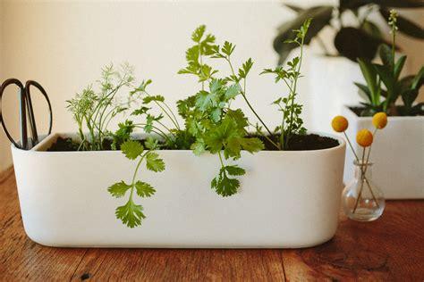 plant easiest herbs  grow indoors pass  pistil