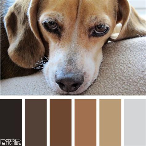 beagle colors color palette beagle brown color palettes