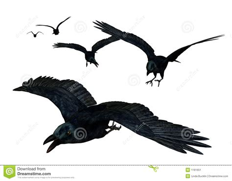 crows flying stock illustration illustration of flight