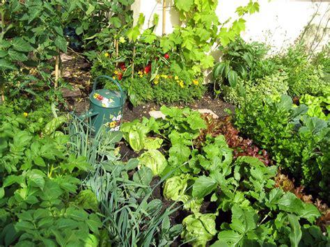 home garden vegetables marina times start gardening now for summer enjoyment