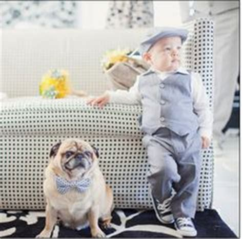 pug ring bearer dogs in weddings on ring bearers wedding dogs and flower