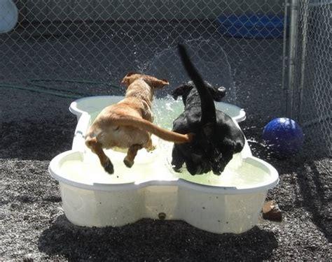 Planschbecken Kunststoff Hund by Pools Pet Pools Plastic Pet Pools Inground Pet Pools