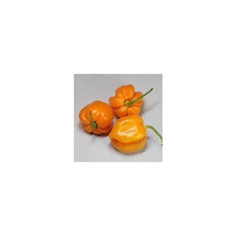 canapé pumpkin semi di peperoncino roatan pumpkin habanero