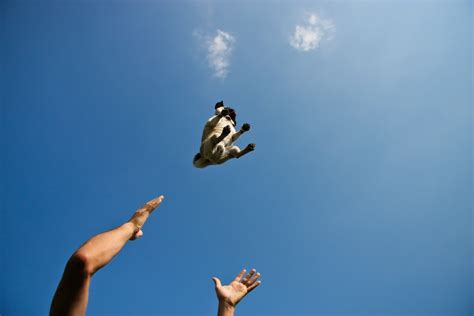 the flying pug the flying pug this photo taken by bill periklis ripis flickr
