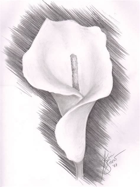 calla lily by xnivalisx on deviantart