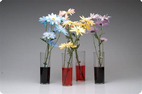 experiment on flowers that change color science project