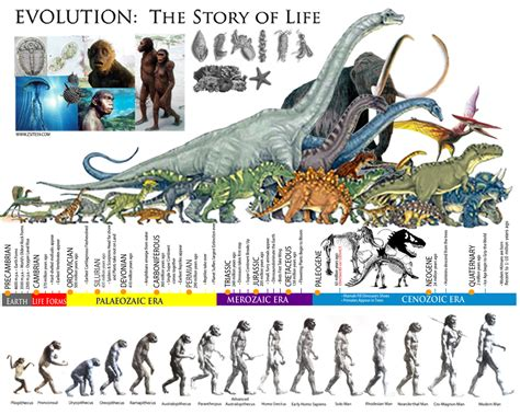 story of life evolution evolution the story of life the prehistoric eras dinosaur timeline prehistoric evolution