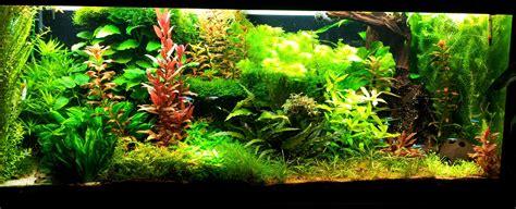 Lu Led Aquascape Diy diy led le selber bauen seite 65 aquariumbeleuchtung aquascaping forum
