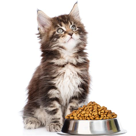 Cat Food Meo Kitten salmon brown rice food per pound pet wants