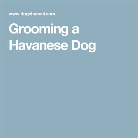 do havanese dogs bark a lot best 25 havanese grooming ideas on havanese haircuts havanese and