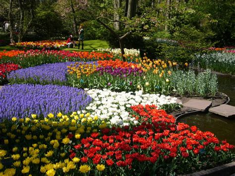 flower in the garden colorful keukenhof gardens holland world for travel