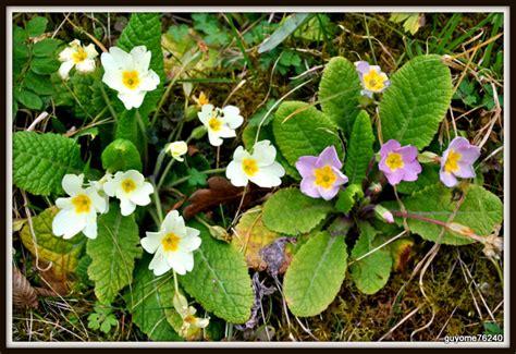 Fleurs De Printemps by Premieres Fleurs Du Printemps Guillaume Augeard Photographie