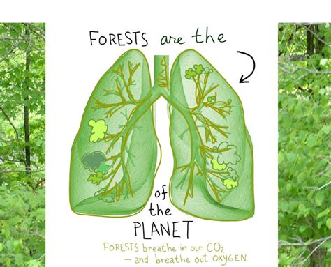 earth can t breathe show me a sign books care about the forest here s what you can do grist