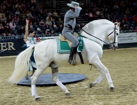 Schemel Englisch by Andalusi 235 R Paard