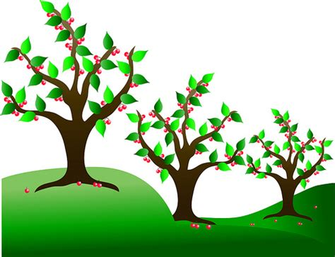 Cherry Tree Clipart clip illustration of cherry trees in an orchard