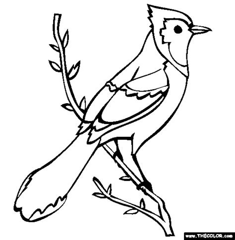 bird pictures to color bird to color blue coloring page free blue