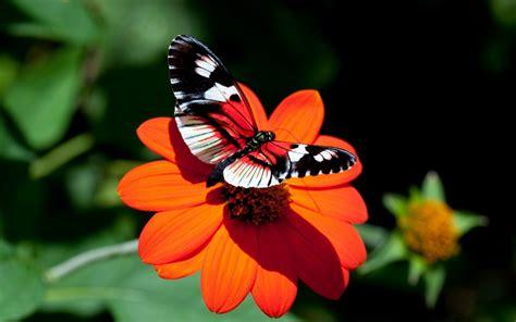 imagenes de mariposas naturaleza hermosas mariposas en la naturaleza fotos e im 225 genes en