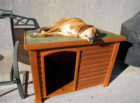 how to build an indoor dog house diy indoor dog kennel interesting ideas for home