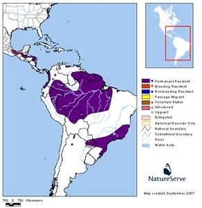 harpy eagle range map