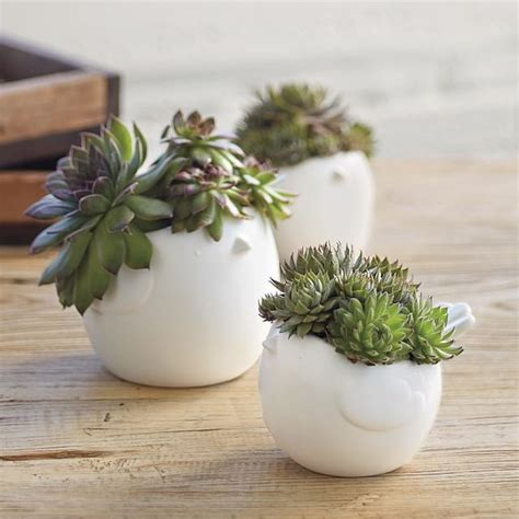 planter for succulents 14 best indoor succulents to grow at home balcony garden web