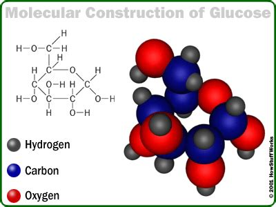 carbohydrates polymer name chapter 5 macromolecules all about macromolecules