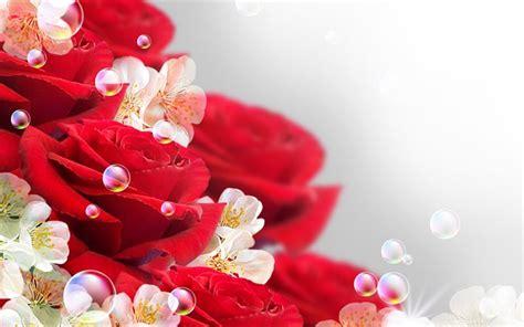 imagenes de rosas rojas descargar gratis descargar fondos de pantalla hermosas flores rosas rojas