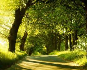 Meditation Bench Canada 心が落ち着く 森 の壁紙 心が落ち着く 森 の壁紙 無料まとめ画像 随時更新 Naver まとめ