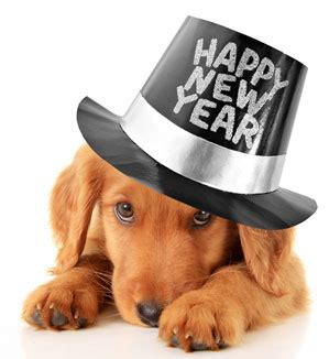 new year animal places we ve got new year s resolutions for pet owners