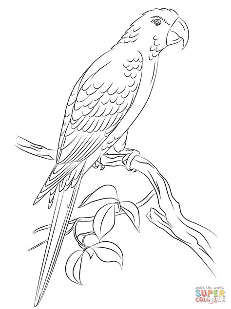 jamaican red macaw coloring page free printable coloring