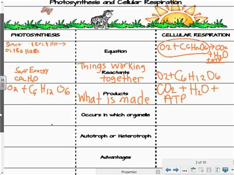 comparing photosynthesis and cellular respiration worksheet compare and contrast cellular respiration and photosynthesis lesson