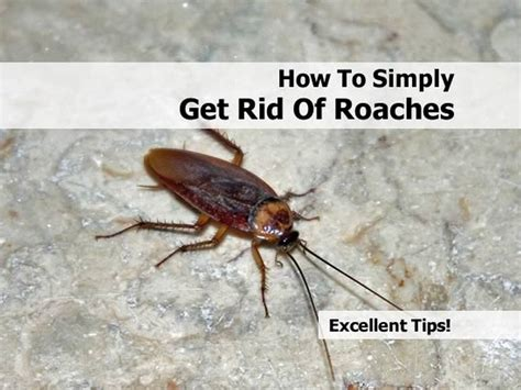 simply get rid of cockroaches in your home in 4 easy steps