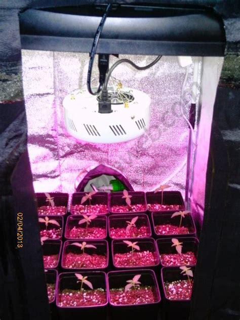 cultiver du cannabis en espaces r 233 duits du growshop