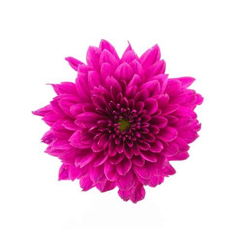 fiore croco croco fiori foto e vettori gratis