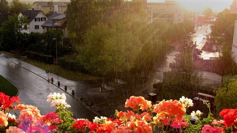 Rainy Summer by Rainy Season Hd Wallpapers For An Android Phone Free
