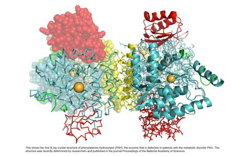 protein structure enzyme protein structure