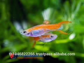 Fish /  Fish For Sale   Buy Fancy  Fish,Freshwater Fish