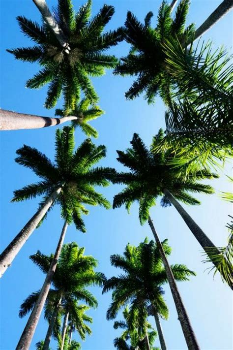 tree wallpaper pinterest 140 best images about palm trees on pinterest