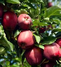k fruit inc k w greenery inc 187 fruit trees