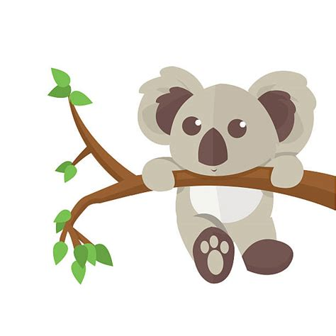 koala clipart royalty free herbivorous clip vector images