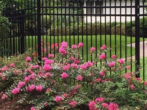 summer flowering shrubs sun 17 best images about landscaping ideas on