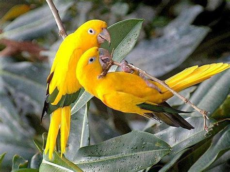 bright yellow with green birds splash my life in colors
