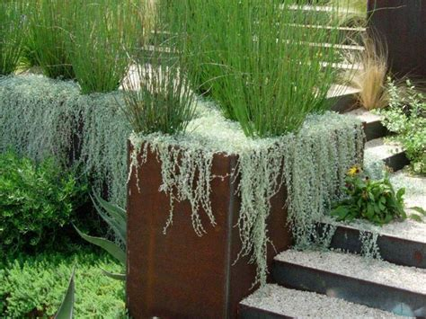 cascading indoor plants 25 best images about cascading plants on pinterest