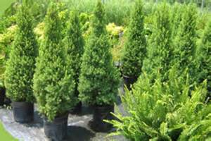 home depot shrubs home depot coupon trees shrubs save 10 when you
