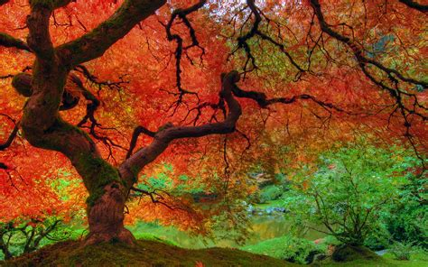 autumn color 25 stunning fall wallpapers