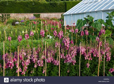 Cutting Flower Garden Cut Flowers Growing And Selectionrhs Gardening 17 Best Images About Cutting Gardens On