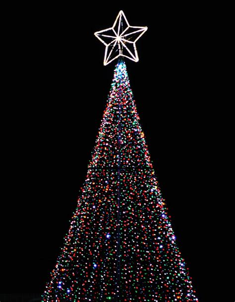 christmas trees photography contest 12918 pictures page