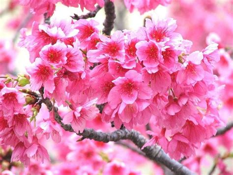 fiori e frutti fiori e frutti speciali fiori e frutti speciali sul