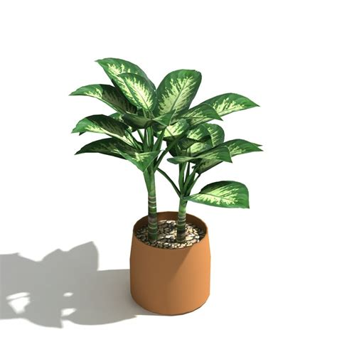 grow ls for indoor indoor tropical plants upright inc 100 in door plant