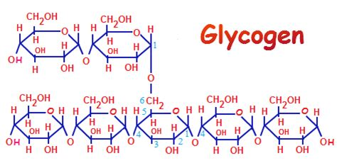 carbohydrates generally a molecular formula wood template home