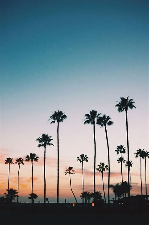 tree los angeles 25 trending palm trees ideas on palms